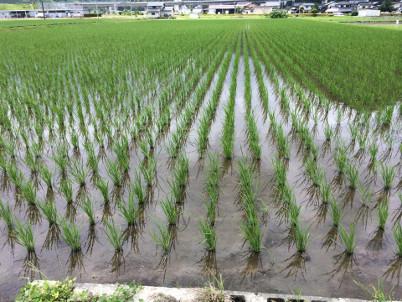 下層A-3こしひかり2_カルテック農法とは画像00サムネイル