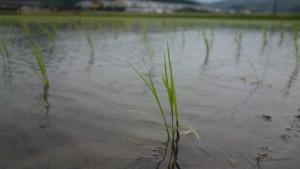 もし農 和田山 コシヒカリ 兵庫県産 単一農家米 カルテック農法